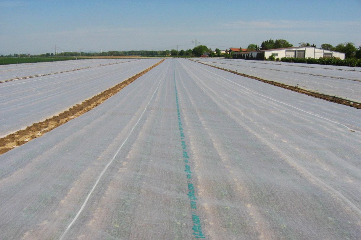 tessuto-non-tessuto-per-agricoltura-e-protezione-piante