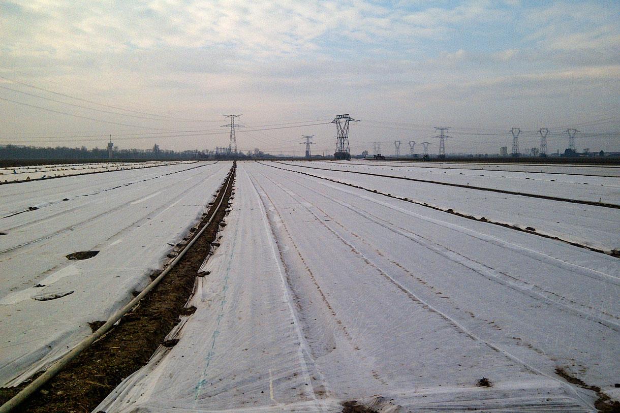 tessuto-non-tessuto-per-la-filtrazione-e-agricoltura